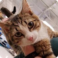 Adopt A Pet :: Buddy - St. Louis, MO