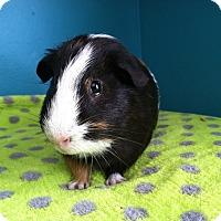 Adopt A Pet :: Richie - Coral Springs, FL