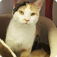 Adopt A Pet :: Gingy - Colorado Springs, CO