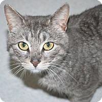 Adopt A Pet :: Hector - Victor, NY