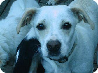 Dachshund Mix Dog for adoption in Atascadero, California - Madonna
