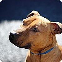 Adopt A Pet :: Gulliver - Port Washington, NY