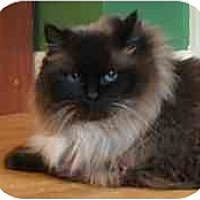 Adopt A Pet :: Dharma - Keizer, OR