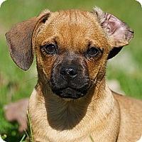 Adopt A Pet :: Binkley - Providence, RI