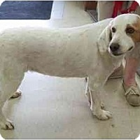 Adopt A Pet :: Dolly - Racine, WI