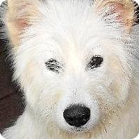 Adopt A Pet :: RARE-PICARDI SHEPHERDS - Wakefield, RI
