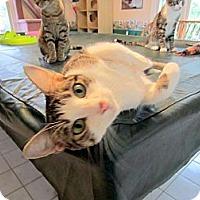 Adopt A Pet :: Fiesta (& Carla) - Arlington, VA