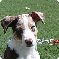 Adopt A Pet :: Sheldon - PENDING - kennebunkport, ME