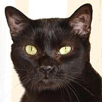 Adopt A Pet :: Izzy - Jackson, MS