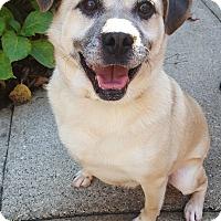 Adopt A Pet :: Zachary - Fennville, MI