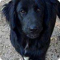 Adopt A Pet :: Buddy - Seabrook, NH