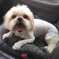 Adopt A Pet :: PELUCHE - Los Angeles, CA