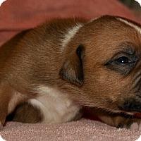 Adopt A Pet :: Coco - West Palm Beach, FL