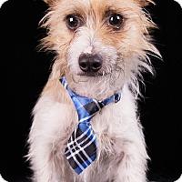 Adopt A Pet :: Dante - Lodi, CA