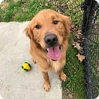 Adopt A Pet :: Rico - Virginia Beach, VA