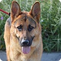 Adopt A Pet :: Drone - San Diego, CA