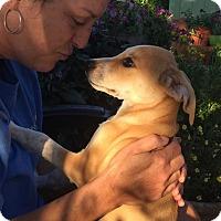 Adopt A Pet :: Norman - E. Greenwhich, RI