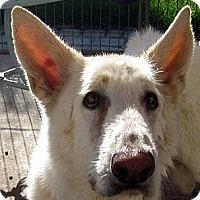 Adopt A Pet :: Slick - Oakley, CA
