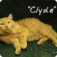 Adopt A Pet :: Clyde - Ocean City, NJ