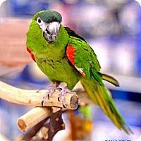 Adopt A Pet :: Oliver - Lenexa, KS