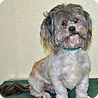 Adopt A Pet :: Dusty - Port Washington, NY