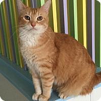 Adopt A Pet :: Lugh - Topeka, KS