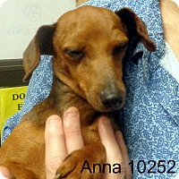 Adopt A Pet :: Anna - Greencastle, NC