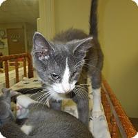 Adopt A Pet :: Rue - Medina, OH