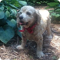 Adopt A Pet :: Grace - Port Washington, NY
