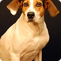 Hound (Unknown Type) Mix Dog for adoption in Newland, North Carolina - Paige