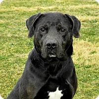 Adopt A Pet :: Tank  34333422 - Westampton, NJ