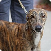 Adopt A Pet :: Pear - Brandon, FL