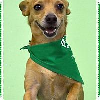 Adopt A Pet :: Gordo - Phoenix, AZ