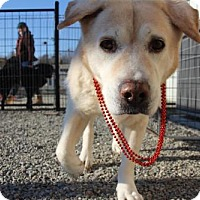 Adopt A Pet :: Smokey - Warrington, PA