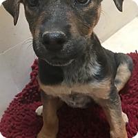Adopt A Pet :: Martika - Tucson, AZ