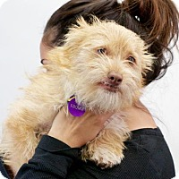 Adopt A Pet :: *Fromm Kibble - Pittsburg, CA