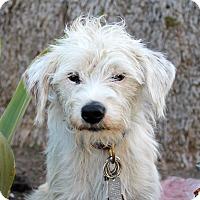 Adopt A Pet :: Agent K - Los Angeles, CA