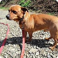 Adopt A Pet :: Hans - Tillamook, OR