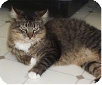 Domestic Mediumhair Cat for adoption in El Cajon, California - Stripes