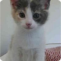 Adopt A Pet :: Violet - Davis, CA