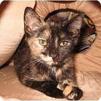 Adopt A Pet :: Mishka - Colmar, PA