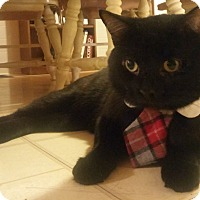 Adopt A Pet :: Yadi - St. Louis, MO