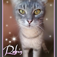 Adopt A Pet :: ROBIN Sweet Girl - Ocala, FL