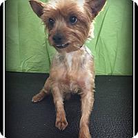 Adopt A Pet :: Zen - Indian Trail, NC