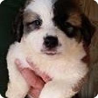 Adopt A Pet :: Dumplin - Gainesville, FL