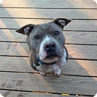 Adopt A Pet :: CANDICE - Kimberton, PA