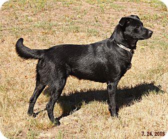 Labrador Retriever Mix Dog for adoption in Braintree, Massachusetts - Drina