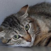 Adopt A Pet :: Lucy - Des Moines, IA