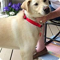 Adopt A Pet :: Chloe - Troy, MI