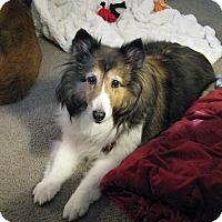 Adopt A Pet :: Jersey (Adoption Pending) - New Castle, PA